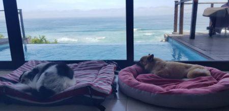 Pet Friendly Luxury Villa in Wilderness